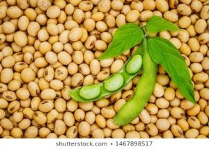SOYA BEANS SUPPLY ON MARKET DWINDLES